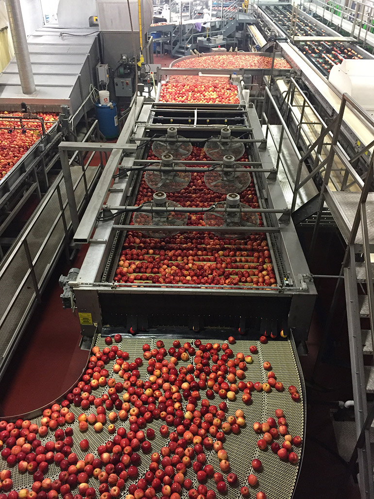 Ontario Apple Packing Plant