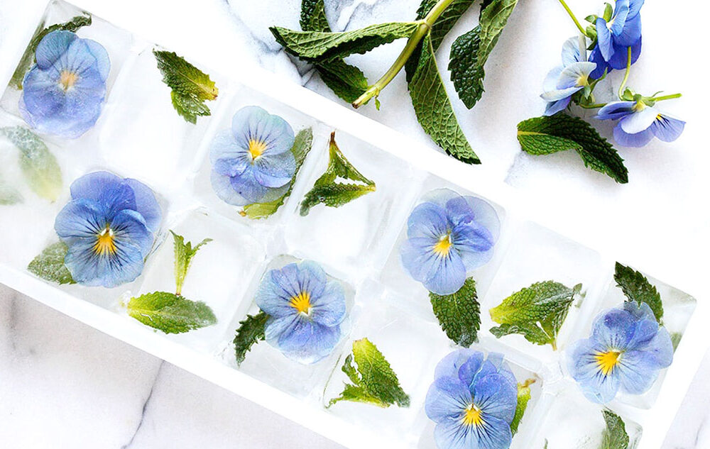 pansy ice cubes in ice cube tray