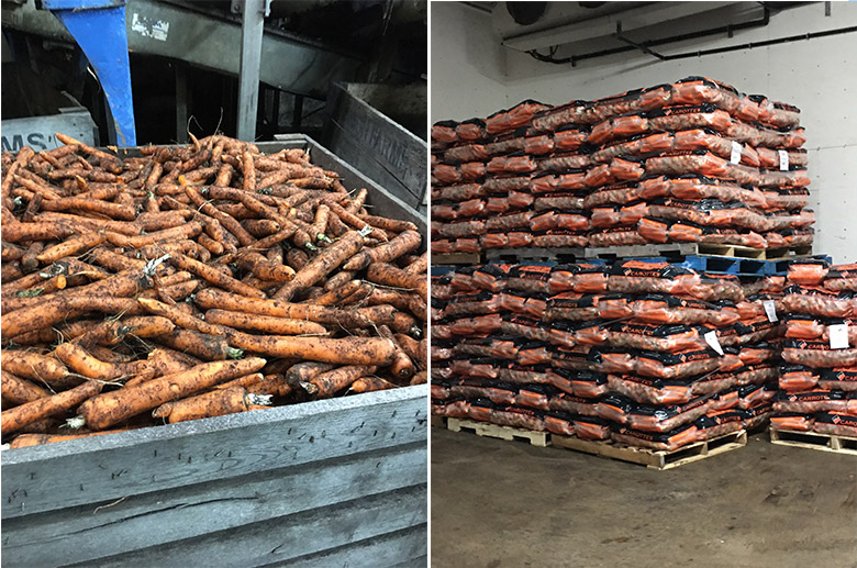 carrot packaging plant